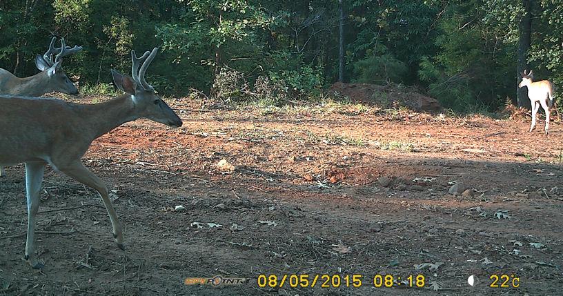 Name:  Bucks.jpg Views: 961 Size:  158.3 KB